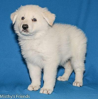 27-06-2014-Misthy's Friends -K nest Pup Kelly-Fiddles