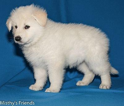 27-06-2014-Misthy's Friends -K nest Pup Kohei-Yuki