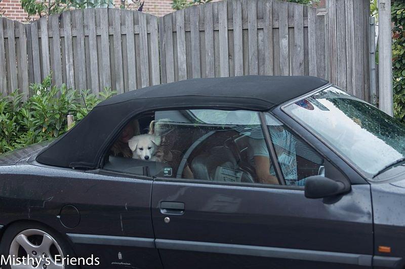 Misthy's Friends Luke in de auto