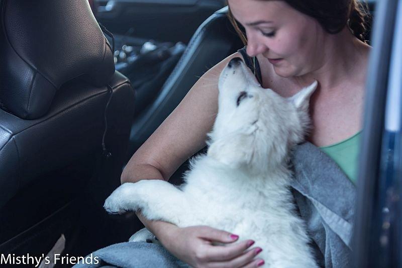 Mysty's Friend Lady Bella in de auto