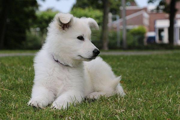 Misthy's Friend Leeroy pupje