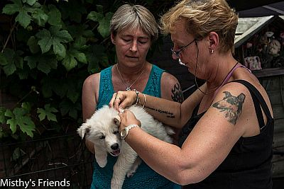 1 juli 2015 Zwitserse witte herder L nest Dierenarts bezoek pup Teef wit Lady Bo