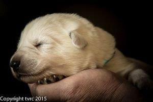 26 mei 2015 Misthy's Friends L nest pup Reu groen