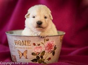4 juni 2015 Misthy's Friend L nest pup Reu Roze