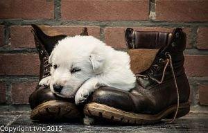 11 juni 2015 Misthy's Friends L nest pup Teef Paars