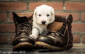 11 juni 2015 Misthy's Friends L nest pup Teef Rood