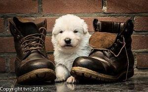 11 juni 2015 Misthy's Friends L nest pup Reu Roze