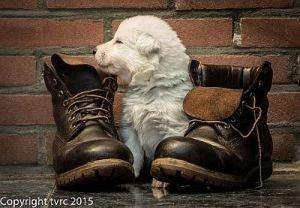 11 juni 2015 Misthy's Friends L nest pup Reu Groen