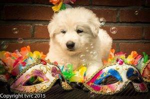 Reu Blauw18 juni 2015 Misthy's Friends L nest pup