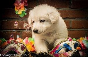 18 juni 2015 Misthy's Friends L nest pup Reu Zwart