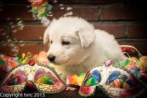18 juni 2015 Misthy's Friends L nest pup Teef Orange