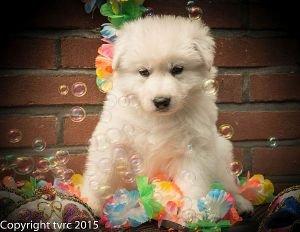 18 juni 2015 Misthy's Friends L nest pup Reu Paars
