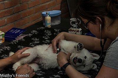 29 juni 2015 Dieren arts bezoek L nest pup Reu Blauw Lex