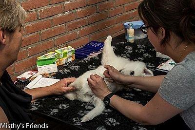 29 juni 2015 Dieren arts bezoek L nest pup Rood Lola