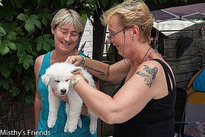 1 juli 2015 Zwitserse witte herder L nest Dierenarts bezoek pup Lex