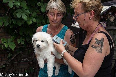 1 juli 2015 Zwitserse witte herder L nest Dierenarts bezoek pup Leeroy