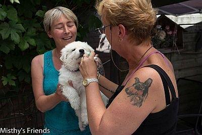 1 juli 2015 Zwitserse witte herder L nest Dierenarts bezoek pup reu paars Leeroy