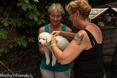 1 juli 2015 Zwitserse witte herder L nest Dierenarts bezoek pup Lady Belle