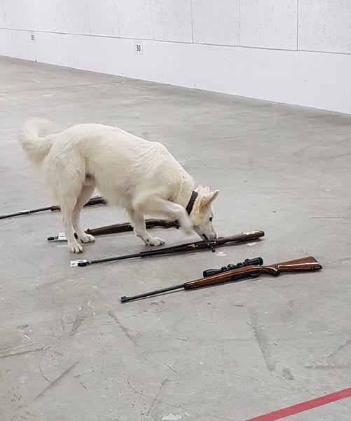 Mika voor examen bezig met het gevaarlijke werk