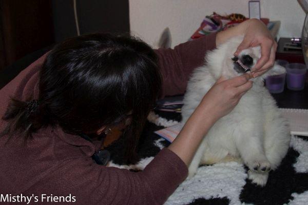Zwitserse witte herder kennel krijgt bezoek van Dierenarts Pup Teef paars Nokita