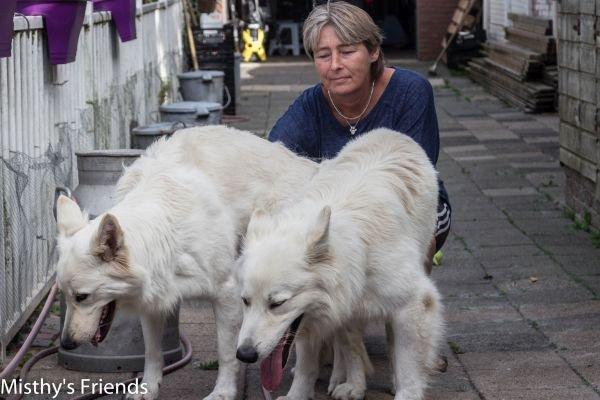 Zwitserse witte herder Easy en Heaven