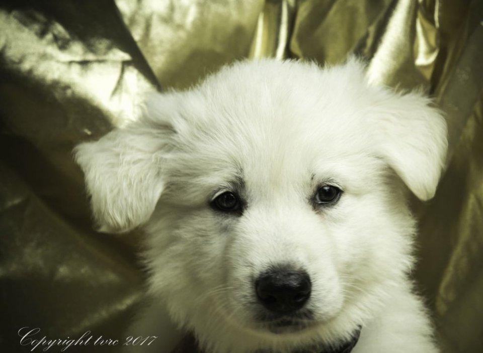 Foto's gemaakt op 16 mei 2017 pup Reu Purple Oliver