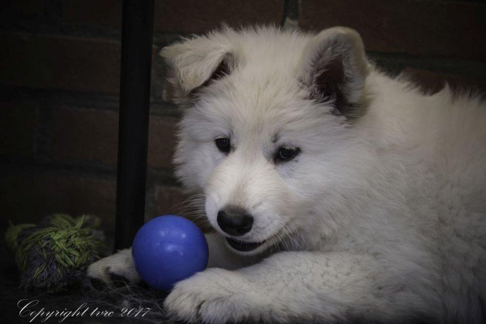 Foto's gemaakt op 23 mei 2017 pup Rose Osa
