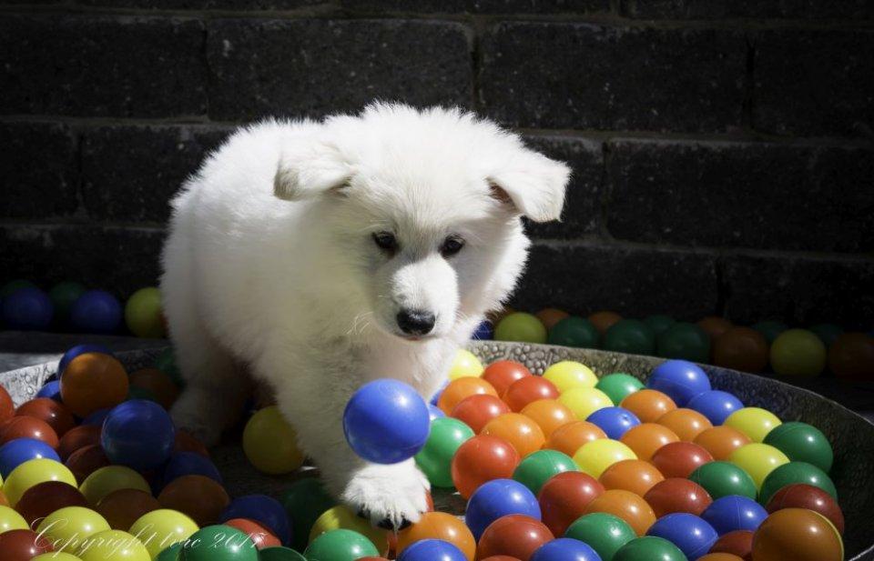 Foto's gemaakt op 23 mei 2017 pup bRUIN sOLAR