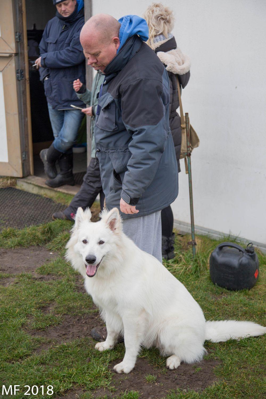 Zwitserse witte herder Misthy's Friend Isco met baas 2018