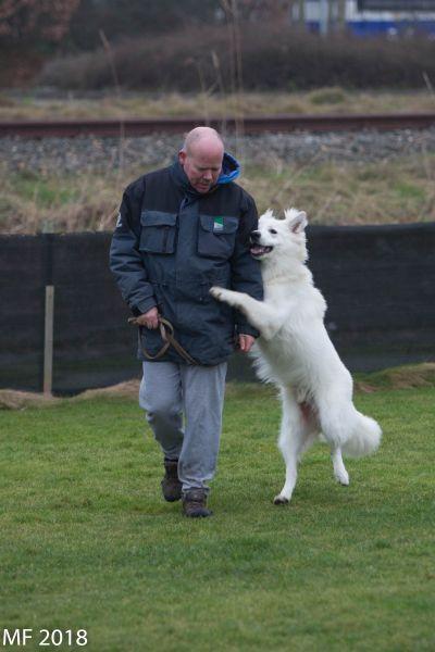 Zwitserse witte herder Misthy's Friend Isco Terugkom dag