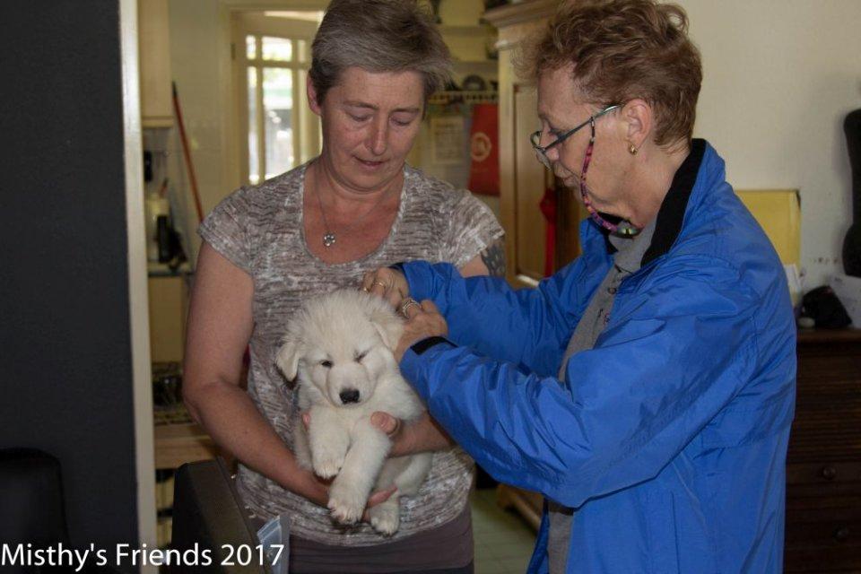 Bezoek dierenarts op 10 mei 2017 pup reu paars Oliver