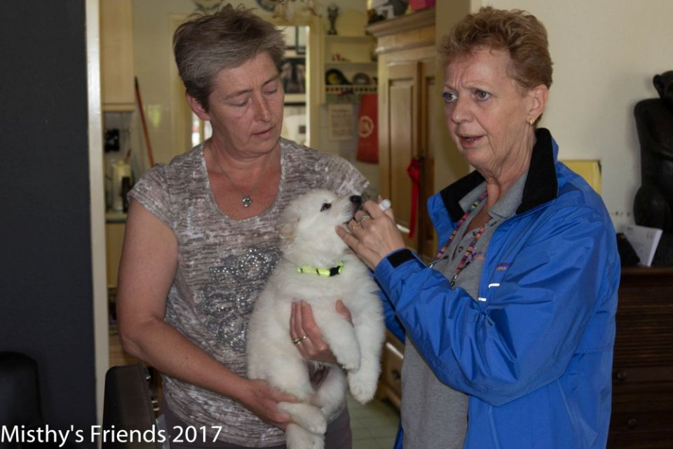 Bezoek dierenarts op 10 mei 2017 pup reu Green Ody