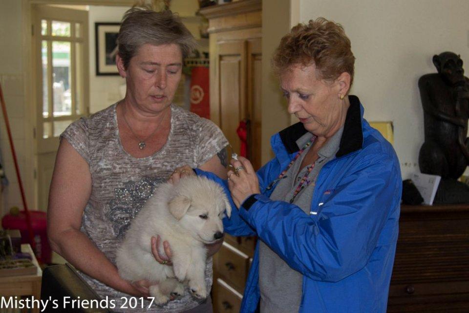 Chipper bezoek 9 mei 2017 teef rood Alaska