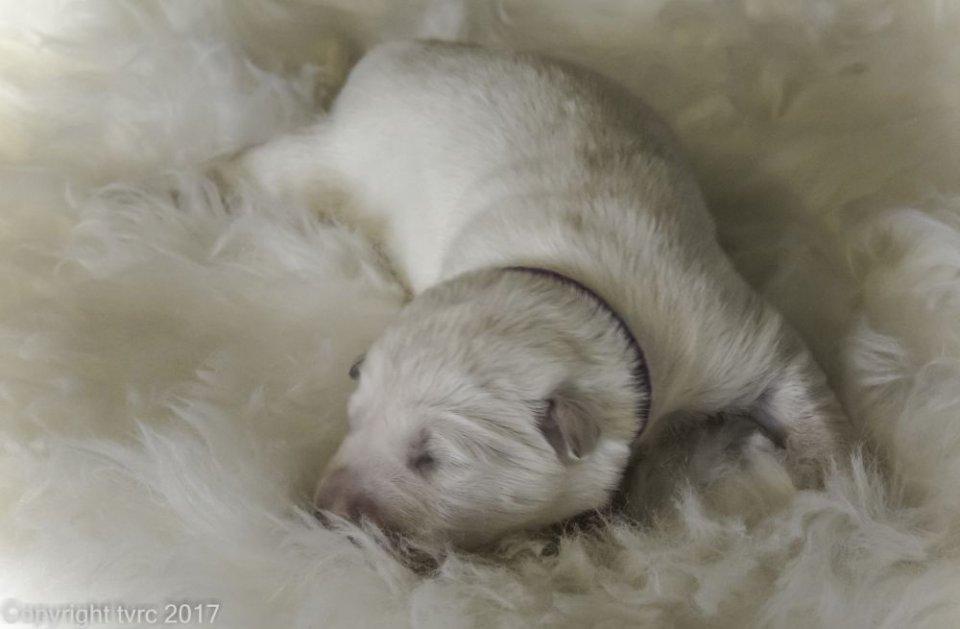 Foto's gemaakt op 8 april 2017 pup Reu Paars