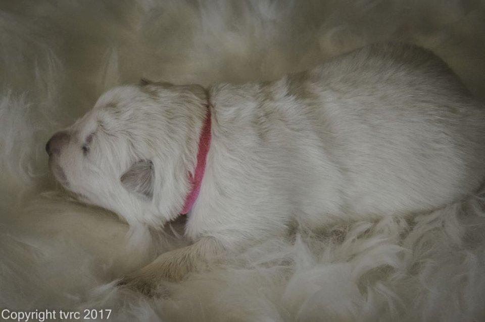 Foto's gemaakt op 8 april 2017 pup Teef Roze