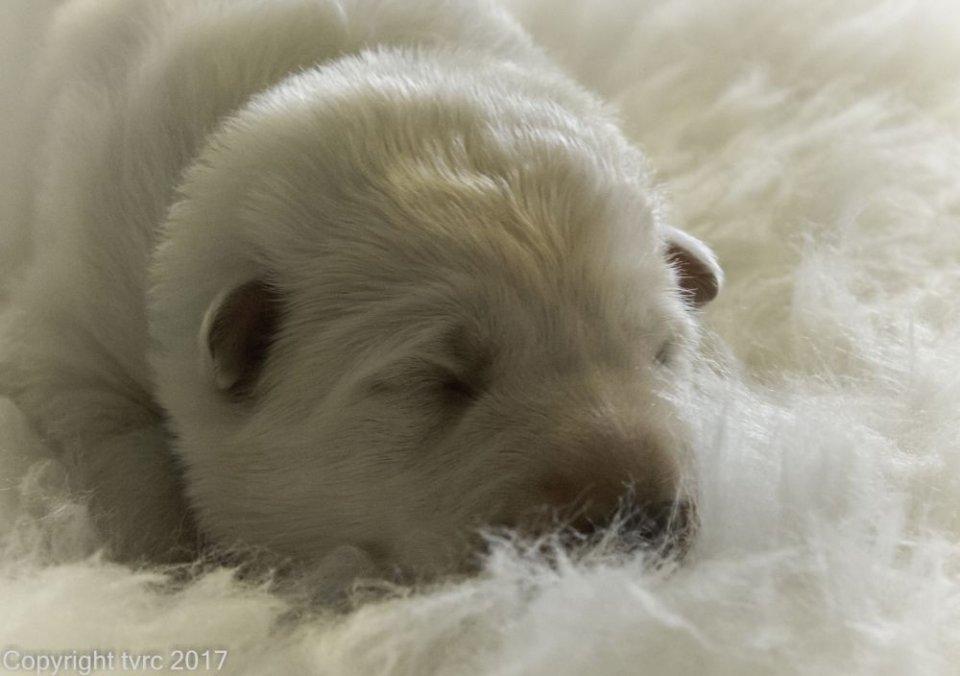 Foto's gemaakt op 8 april 2017 pup Reu Groen