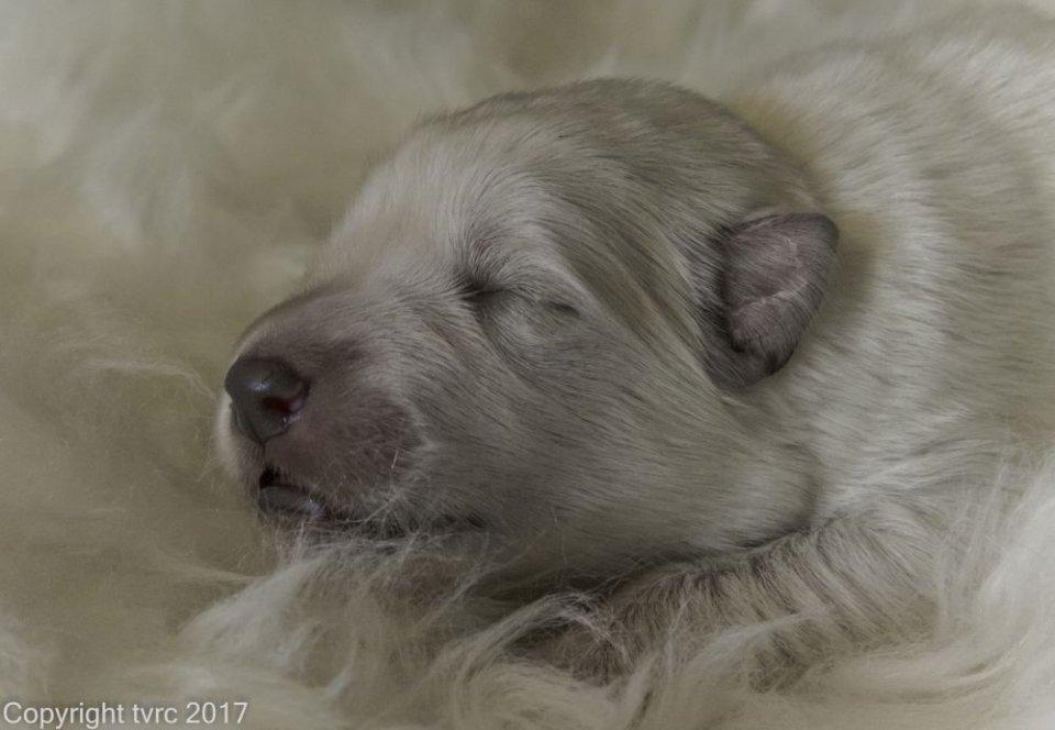 Foto's gemaakt op 8 april 2017 pup Reu geen Bandje