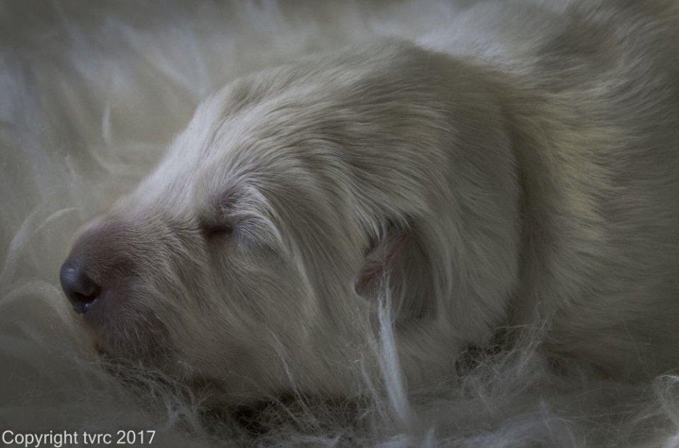 Foto's gemaakt op 8 april 2017 pup Reu Wit