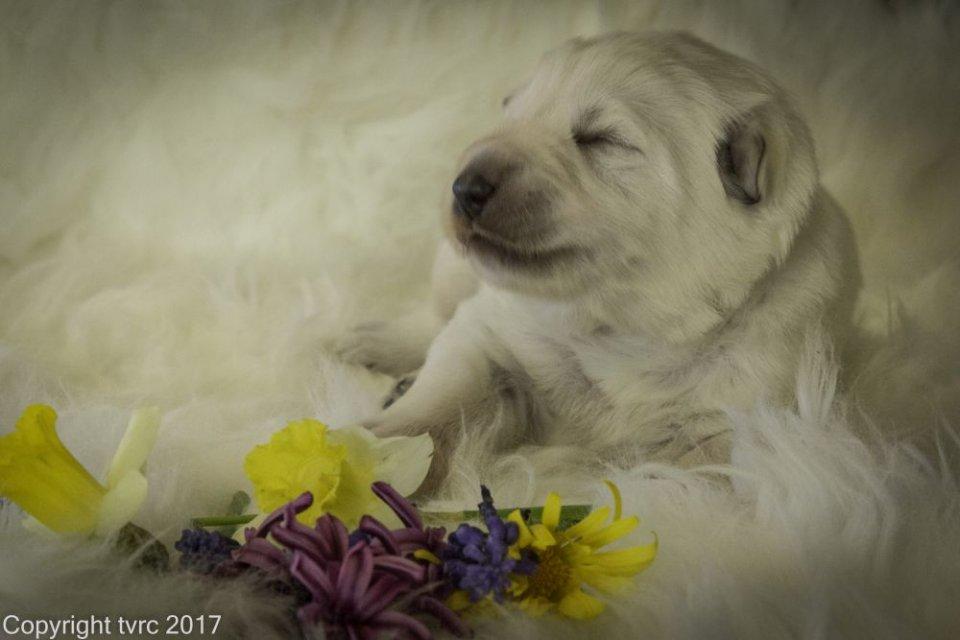Foto's gemaakt op 11 april 2017 pup Reu Wit