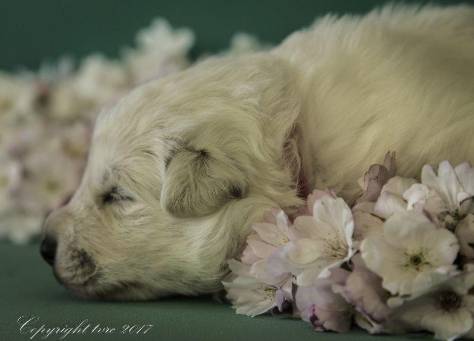 Foto's gemaakt op 18 april 2017 pup Teef roze