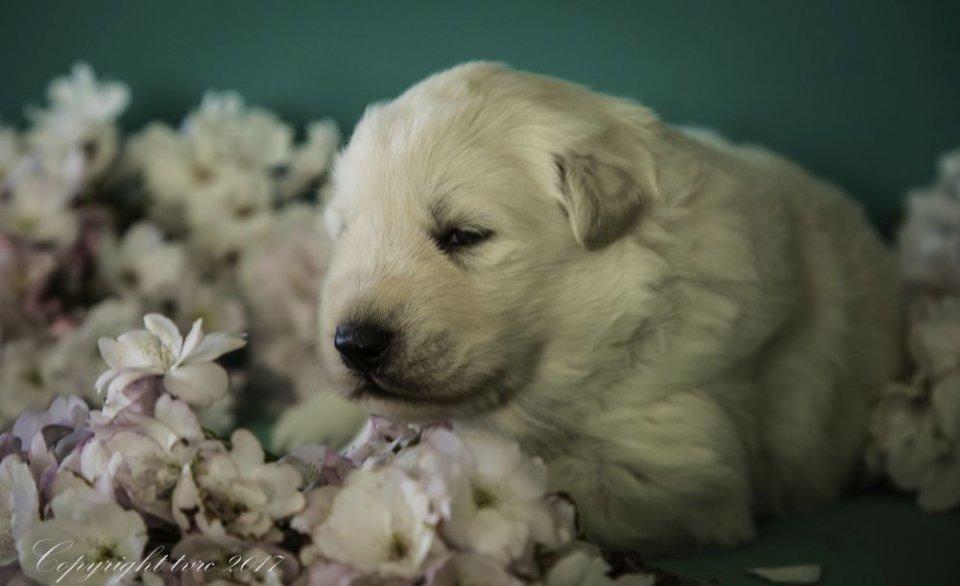 Foto's gemaakt op 18 april 2017 pup Teef Rose