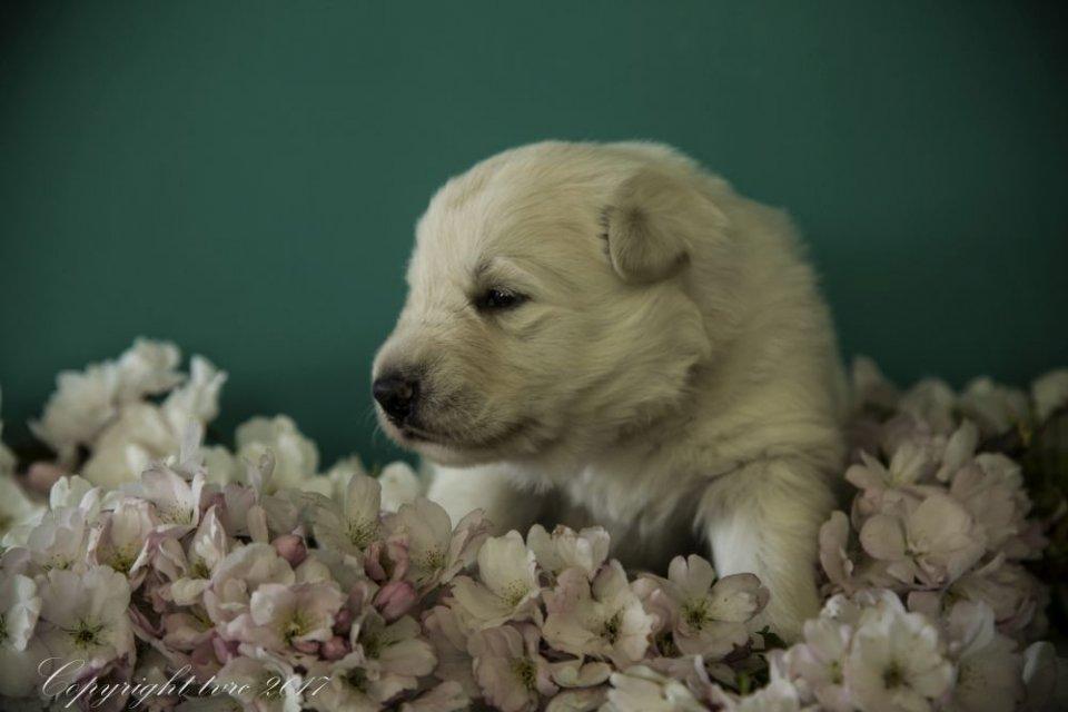 Foto's gemaakt op 18 april 2017 pup Teef Rood