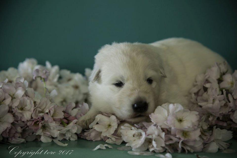 Foto's gemaakt op 18 april 2017 pup Reu White