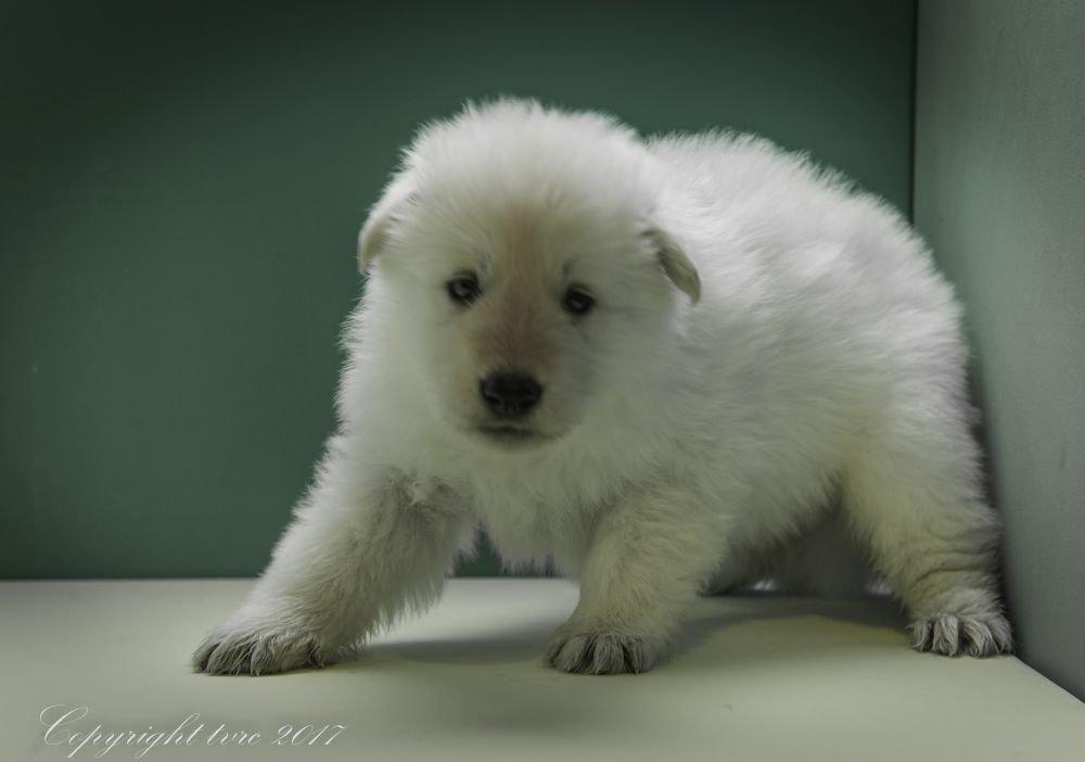 Foto's gemaakt op 2 mei 2017 pup reu geen bandje
