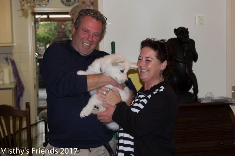 Zwitserse witte herder Misthy's friends Prins Arlo met zijn nieuwe baasjes