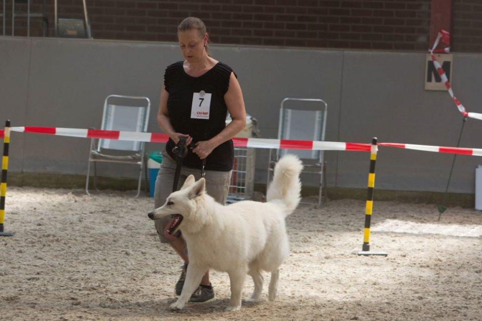 Zwitserse witte herder Misthy's friends Pax 27 mei 2018