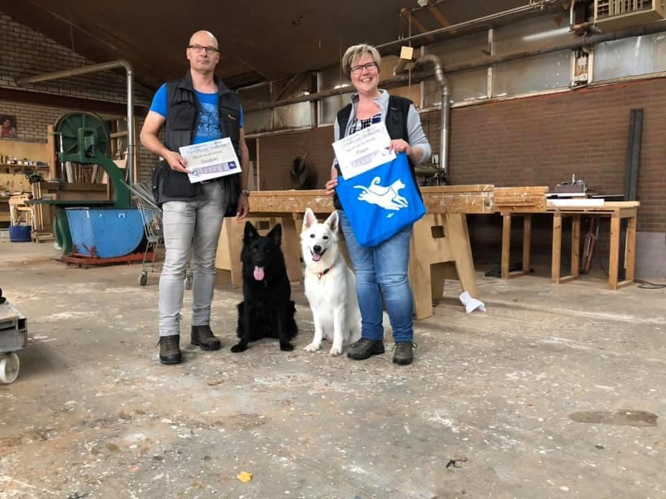 Zwitserse witte herder Misthy's Friends teef Pippa 2020 detectie diploma