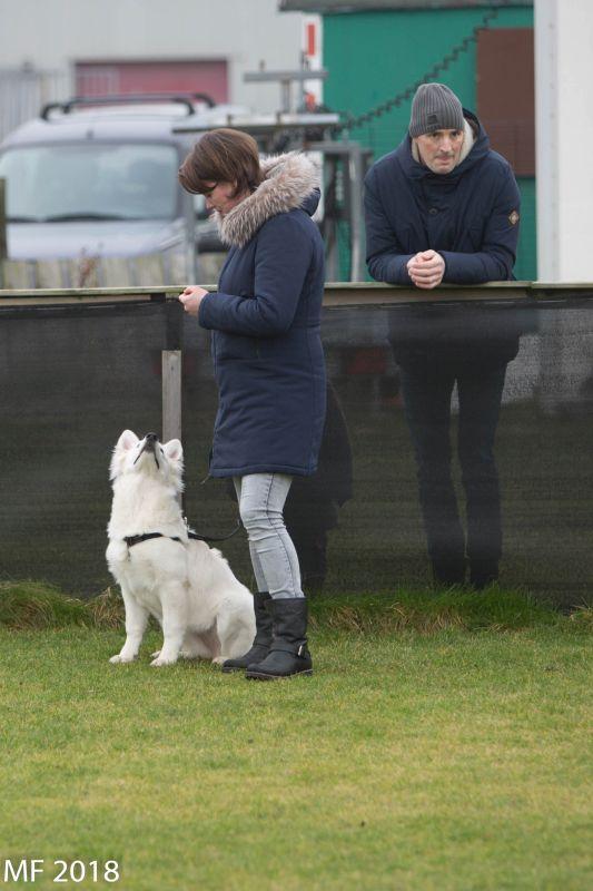 Zwitserse witte herder Misty's friends Puck onder appel 2018