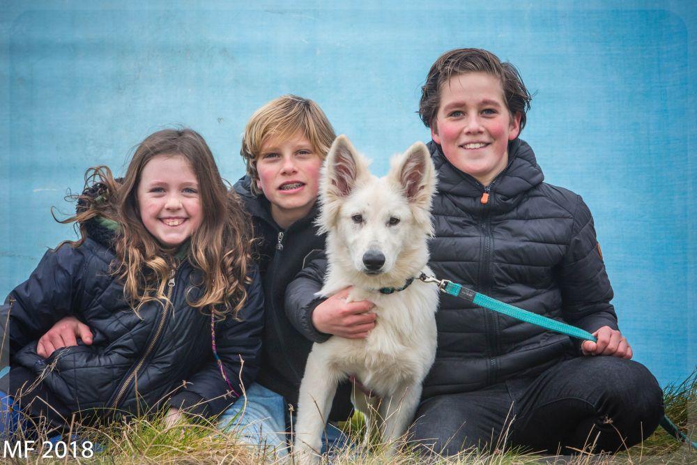 Zwitserse witte herder Misthy's friends Puma 13 januari 2018
