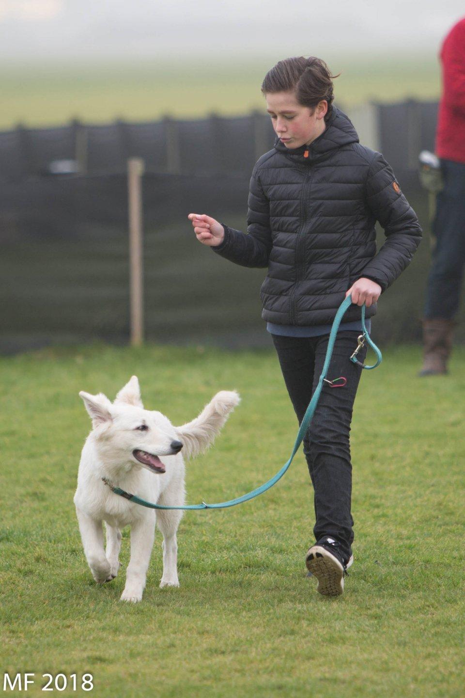 Zwitserse witte herder Misthy's friends Puma onder appel